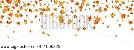 Horizontal Pattern Bright Dried Maple Autumn Foliage Isolated On White. Graphic Design Autumn Symbol