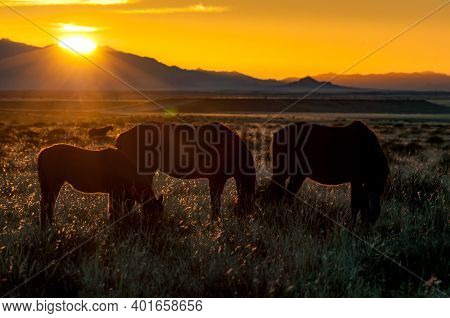 Silhouette Of Wild Horses Of The Namib Grazing Against The Setting Sun. Photo Taken At Garub