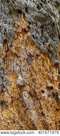 Close Up View Of A Decaying Tree Stump Showing Both Decay And Holes Left By Boring Insects