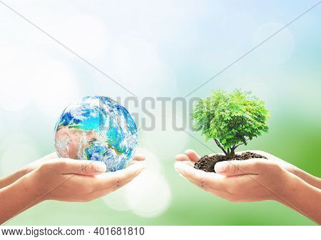 World Environment Day Concept: Two Human Hands Holding Earth Globe And Heart Shape Of Tree Over Blur
