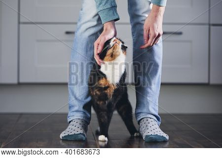 Domestic Life With Pet. Man Stroking His Mottled Cat In Home Kitchen.