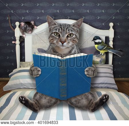 A Gray Cat Is Reading A Blue Book In Bed At Home.