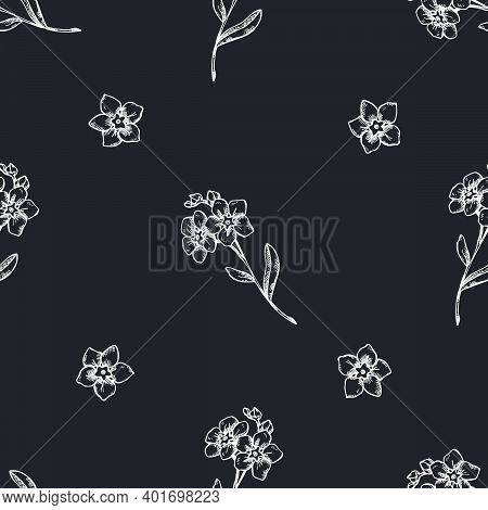 Seamless Pattern With Hand Drawn Chalk Forget Me Not Flower Stock Illustration