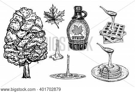 Collection Of A Bottle Of Maple Syrup, Maple Tree And Leaves. Pancakes And Waffles With Maple Syrup.