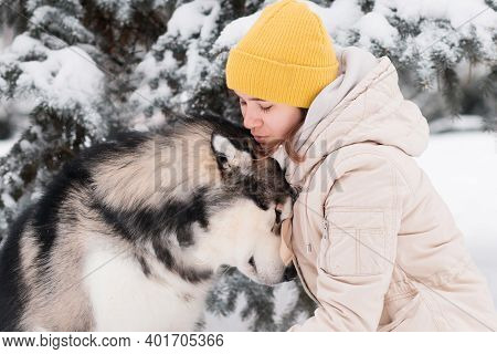 Woman Try To Kiss Alaskan Malamute In Winter Forest. Close Up.