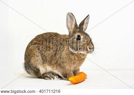 Little Rabbit Feeding On Carrots On A White Background