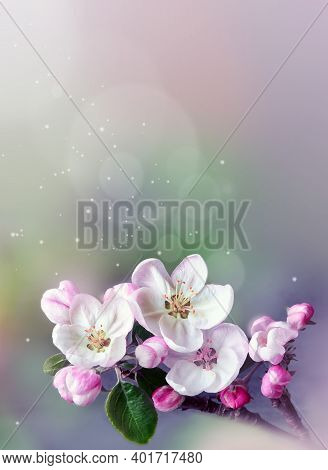 Blossom Tree Over Nature Background. Spring Flowers. Spring Background. Blurred Concept.