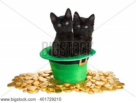 Two Black Kittens In A Saint Patrick's Day Themed Green Top Hat With  Laying On A Bed Of Gold Coins