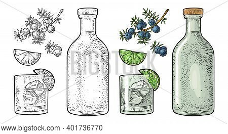 Glass And Bottle Gin And Branch Juniper. Vintage Vector Color Engraving