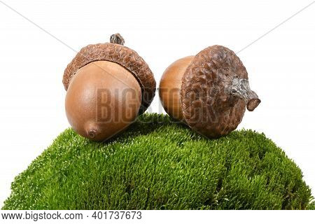 Acorn Of An Oak Tree On A Moss Stone. Isolated On White Background. High Resolution Photo. Full Dept