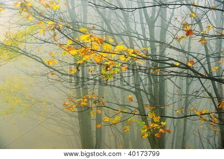 Forest autumn colors