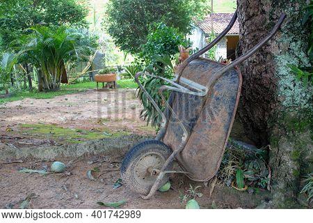 Pushcart Resting On A Mango Tree, On A Farm