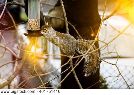Squirrel eating seeds from bird feeder on tree with sun flare