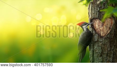 Pileated Woodpecker Bird Carving A Heart Shaped Hole In A Tree. Romantic Magical Forest Background W
