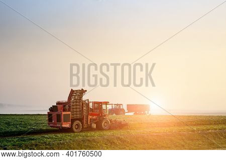 Farmers Harvest Early In The Morning At Sunrise.