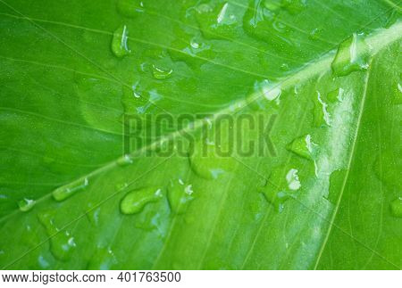 Closeup Of Crystal Clear Morning Dewdrops On Vibrant Green Leaf