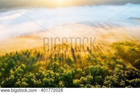 Splendid misty view of tree tops with the rays of morning light. Location place Dniester canyon of Ukraine, Europe. Aerial photography, drone shot. Photo wallpaper. Discover the beauty of earth.