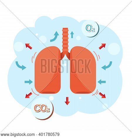 Vector Of Healthy Lung Inhale - Exhale.