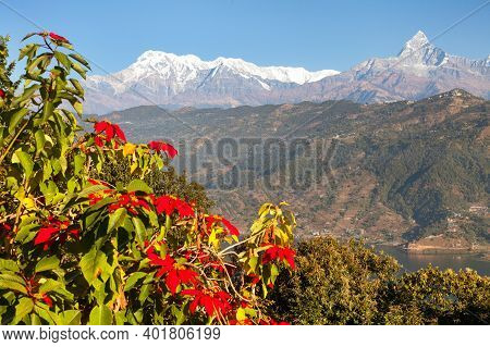 Mount Annapurna With Red Flowers, Annapurna Himal, Nepal Himalayas Mountains