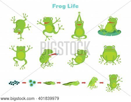 Cartoon Frog. Cute Green Frogs, Isolated Wild Animal In Different Poses. Life Cycle, Biology Vector