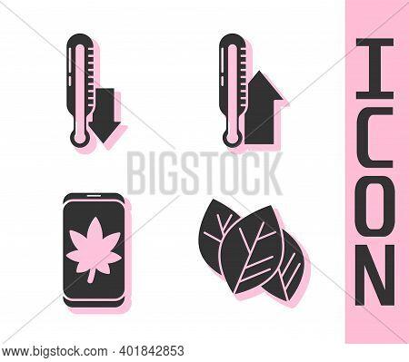 Set Leaf Or Leaves, Meteorology Thermometer, Leaf On Mobile Phone And Meteorology Thermometer Icon.
