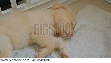 Cute puppy sleep on towel
