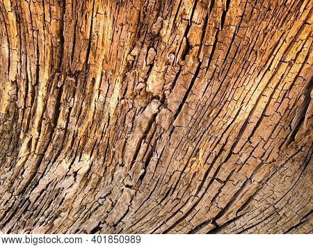 Close Up Old Wood Grain Texture .\nwooden Texture Background. Brown Wood Texture, Old Wood Texture,o
