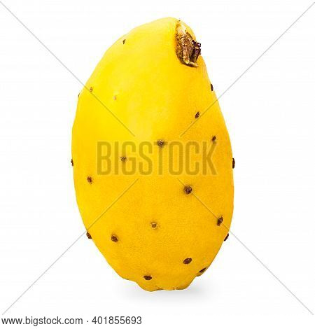Isolated Opuntia Fruits. One Whole Yellow Prickly Pears Cactus Fruit On White Background With Clippi