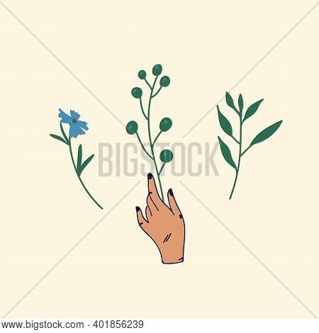 Cute Flowers In Hand. A Set Of Beautiful Plants. A Womans Hand Holds A Flower Of The Field, Meadow.