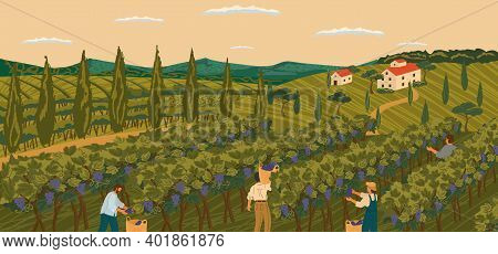 Vineyard Landscape With Grape Tree Field And Winery Villa On Background. Hand Draw Vector Illustrati