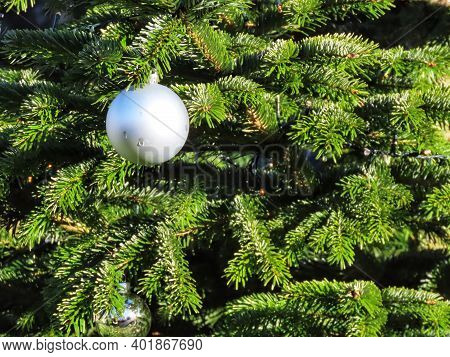 White Christmas Bauble Shining In Bright Sun, Green Fir Tree Branches