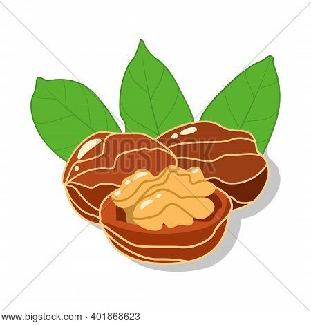 Fresh Walnuts And Cracked Walnut With Green Leaves In Cartoon Style Isolated On White Background. Ve