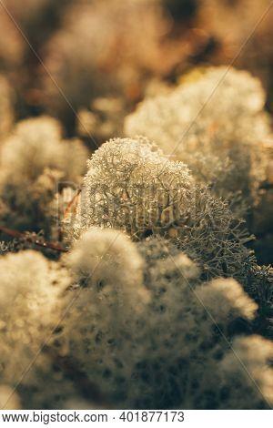 Forest moss fractal structure close-up. Northern scandinavia forest flora