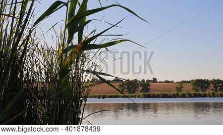 Autumn Lake Shore With Rippled Water Surface And Lush Reed Leaves On Clear Sky Background. Relaxing