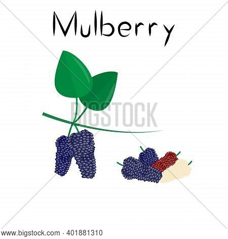 Mulberry Berries. Healthy Detox Natural Product. Organik Dietary Supplement Fruit. Superfood, Berry
