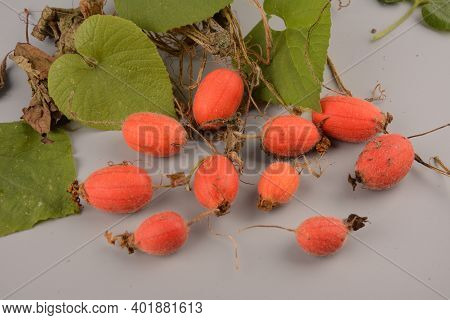 Fruit Of Thladiantha Dubia. Red Cucumber - Perennial Decorative Vine. Decorative Plant