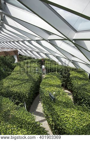 Singapore - Dec 31, 20120: Jewel Changi Hedge Maze Located Inside The Jewel Changi, Singapore. The H