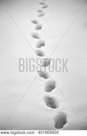 Footprints Of An Animal On Fresh Snow Close-up.