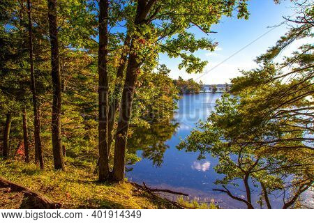 Forest On Inland Lake. Forest On The Edge Of A Freshwater Inland Lake In Ludington State Park In The