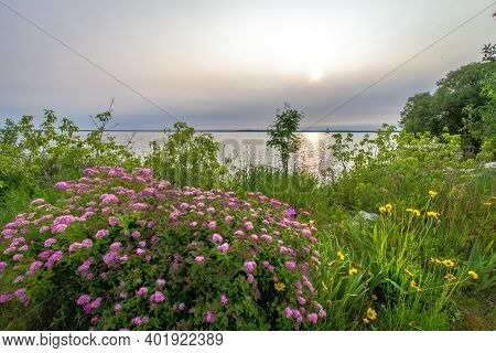 Wildflowers On The Beach. Sunrise Over Lake Michigan With The Sand Point Lighthouse At The Horizon A