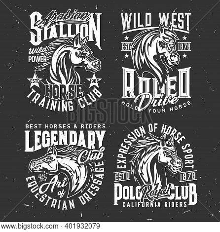 Tshirt Prints With Horse Stallion Heads, Equestrian Dressage, Polo Sport Club Vector Mascots. Mare A
