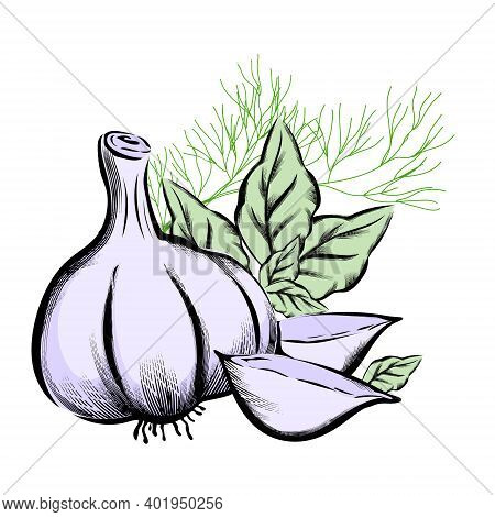 Garlic With Basil Leaves And Dill, Hand Drawn Engraving Vector Illustration Isolated On White Backgr