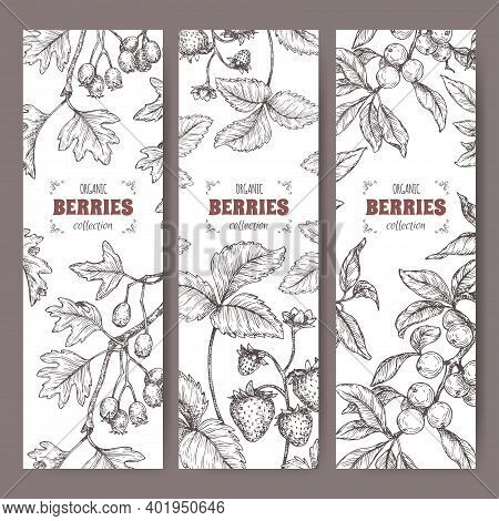 Three Labels With Hawthorn, Blackthorn And Garden Strawberry Branch Sketch. Berry Fruits Series.