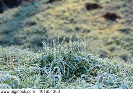 Green Grass With Hoar Frost On A Cold Winter Day With Copy Space