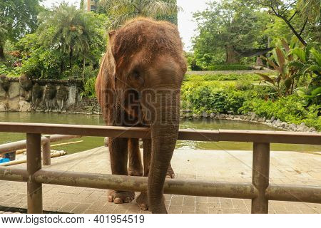 A Close Up Of An Asian Elephant's Trunk