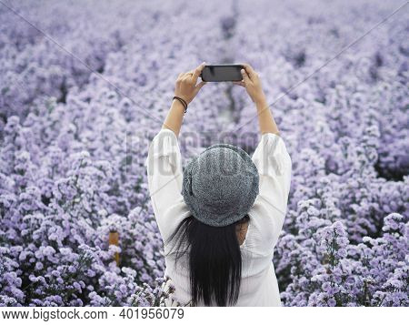 Back View Of Woman Tourist Taking Photograph By Mobile Phone In Violet Marguerite Flowers Field, Chi