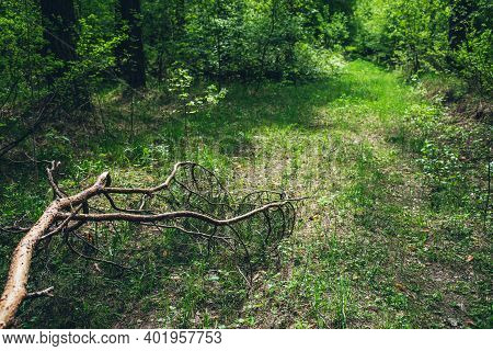 Atmospheric Woodland Scenery With Snag Surrounded By Lush Vegetation. Summer Green Forest Landscape