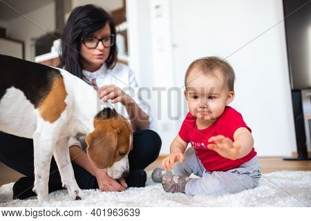Baby With Mother And Beagle Dog On Carpet On The Floor. Baby Activity Theme