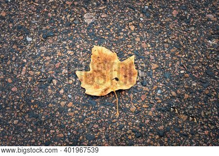 A Yellow Winter Leaf On Tarmac. Photo From Lomma Beach, Scania County, Sweden