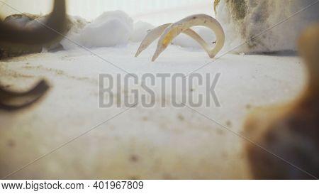 Large Bones Close Up. Large Animal Bone Lying On The Snow, Close Up